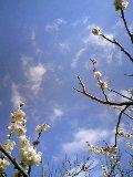 春はやってきていた。